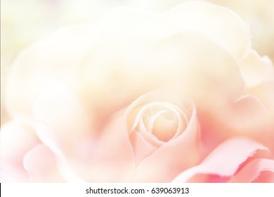 Colorful singles rose flowers fabric made with gradient for background and postcard,Abstract,texture,pastel,Soft and blur style.