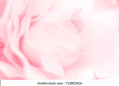 Colorful singles rose flowers fabric made with gradient for background and postcard,Abstract,texture,pink and Soft style.