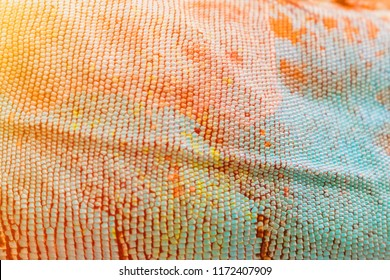 Colorful skin of Iguana background texture