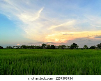 Colorful sky And green fields in the evening