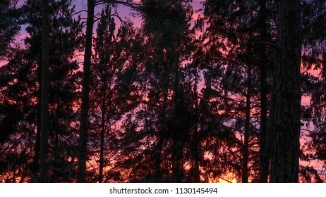 Colorful sky at sunset. Silhouette of forest.