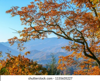 Colorful Smoky Mountain Trees Against a Mountain Backdrop