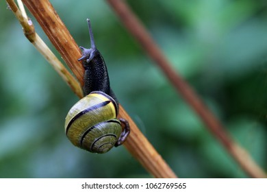 Colorful snail on bamboo