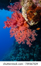 Colorful soft coral