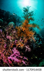 Colorful Soft Coral and Lively Underwater Landscape for scuba diving