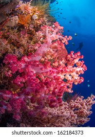 Colorful soft coral at a reef at Bunaken, Indonesia