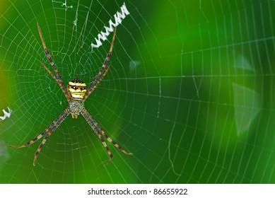 Colorful Spider on the web with green background