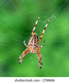 Colorful spider on a web macro with soft green background