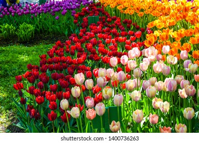 Colorful spring blooming tulip flowers view. Tulip festival in spring Saint Petersburg, Russia. Spring blooming tulip flowers. Spring bloom tulip garden scene
