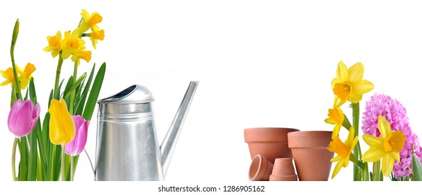 colorful spring flowers arranged on white background with watering can and pots