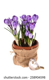 Colorful spring flowers  crocuses and bird isolated on white  wooden background. Easter background.