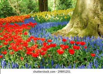 Colorful spring flowers in dutch spring garden 'Keukenhof' in Holland