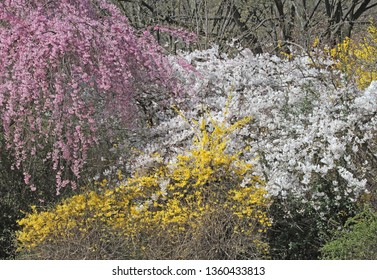 colorful spring flowers in the forest