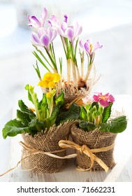 Colorful spring flowers in pots.