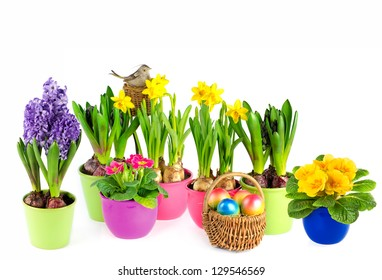 colorful spring flowers in pots. easter decoration. hyacinth, pink primulas, yellow daffodils on white background