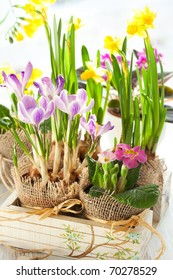 Colorful spring flowers in pots in a wooden box .Narcissus,primula,crocus,freesia, violet