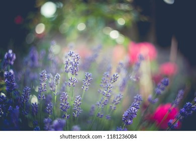 colorful spring flowers swirley bokeh