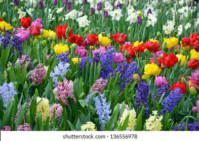 Colorful spring garden with hyacinths, daffodils and tulips