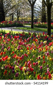 Colorful spring garden on early morning in april - vertical image