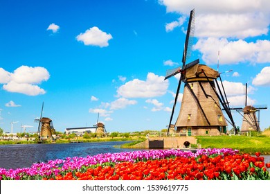 Colorful spring landscape in Netherlands, Europe. Famous windmills in Kinderdijk village with tulips flowers flowerbed in Holland. Famous tourist attraction in Holland