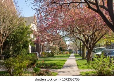 Colorful Spring Neighborhood in Brooklyn