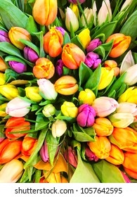 Colorful spring tulip blossoms