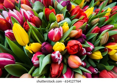 Colorful spring tulips in huge bunch as background image