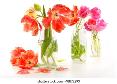 Colorful spring tulips in old milk bottles on white
