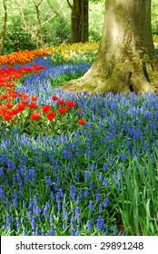 Colorful springflowers in dutch spring garden 'Keukenhof' in Holland