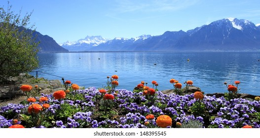 Colorful springtime flowers at Geneva lake, Montreux, Switzerland. See Alps mountains in the background.