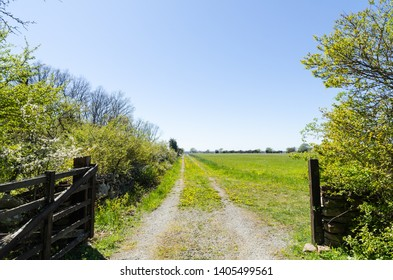 Colorful springtime view with yellow dandelions blossom by an open gate to a country road at the swedish island Oland