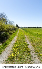 Colorful springtime view with yellow dandelions blossom by a country road at the swedish island Oland