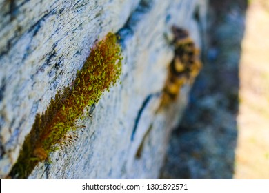 Colorful sprouts find a place to emerge as Spring sets in. Red and green sprouts grow from a crack in a wooden wall. Mushrooms can be seen in the blurry background of a tight focus.