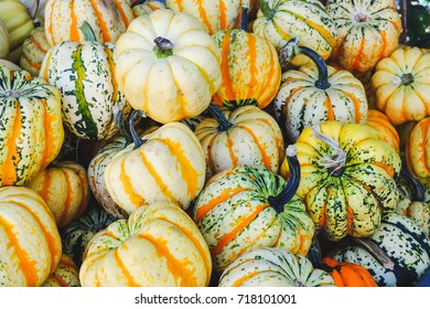 Colorful Squash in a container at fresh market