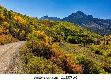 A colorful stand of golden Apsen trees on East Dallas Road in the Uncompaghre National Forest near Ridgeway, Colorado.