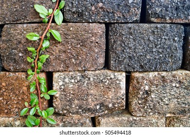 Colorful stone wall with green leaves