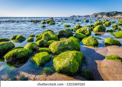 Colorful stones covered with algea at the coast of Sardinia island in  Italy