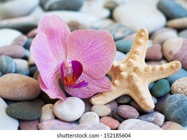 Colorful stones  on the beach - nature background