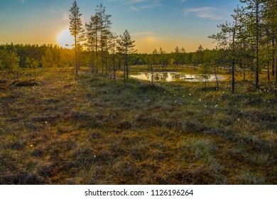 Colorful summer evening landscape in Finnish bog