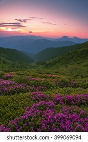 colorful summer landscape with blossom rhododendron flowers, wildflowers midsummer scene,  Europe mountains, beauty world