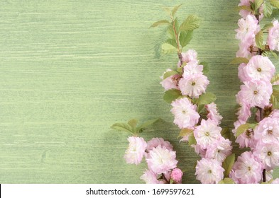 Colorful summer or spring nature background. Pink almond flowers, bud, leaf and petal on green wooden natural background, flat lay. Top view