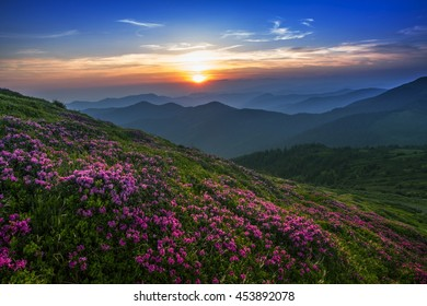 colorful summer sunrise landscape in the mountains with blossom flowers, America travel, east USA, wonderful world