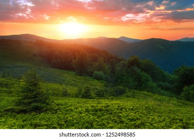 colorful summer sunrise scene, stunning morning dawn landscape in the mountains, green summer forest and mountains hill in golden sunlight, colorful amazing nature image, Europe, beauty world