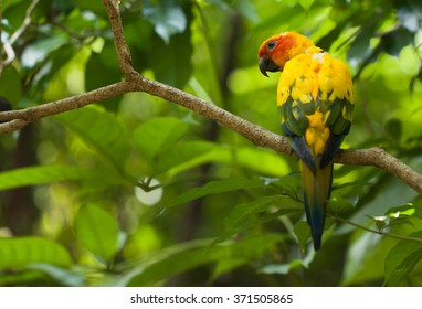 colorful sun conure bird sitting in on a branch in the jungle as a colored jewel in singapore park