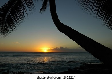 Colorful sun with palm tree silhouette