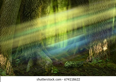 Colorful sunbeams in fairytale forest with old massive trees