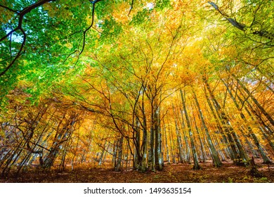 Colorful sunny autumn in wild forest, golden leaves on trees - autumnal natural background, landscape