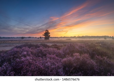 Colorful sunrise over the Dutch heath landscape with flowering heather. Drenthe, the Netherlands.