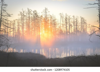 Colorful sunrise at swamp covered in fog. Wooden trail leading through the swamp. Sunshine through the thick mist with tree silhouettes at Cenas Tīrelis in Latvia. Early morning delight.