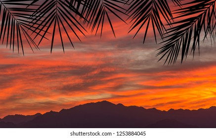 Colorful sunset  above peaks of mountains is seen through silhouettes of palm branches